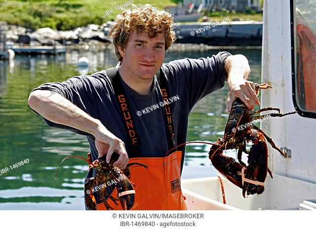 Harbor, lobster, lobsterman, Frenchboro, Long Island, Maine coast, New England, USA