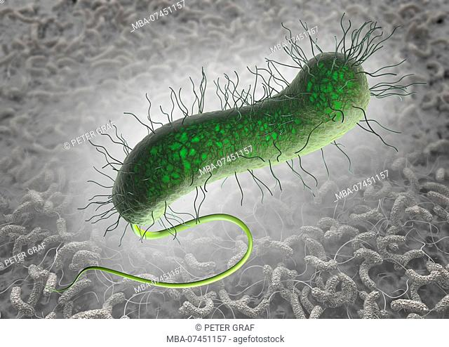Green cholera bacterium with pili and nettle with bacterial colonization on intestinal wall in the background