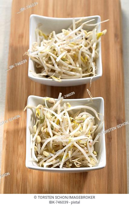 Bean sprouts, soy sprouts in two small bowls