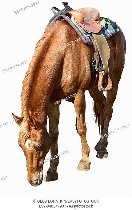 beautiful horse with a saddle on a farm