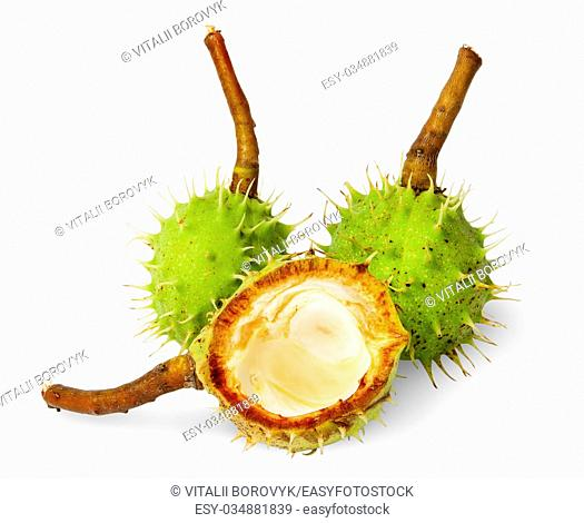 Two wholly chestnuts and peel chestnut isolated on white background