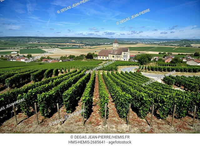 France, Marne, Cuis, Cote des Blancs, Champagne vineyard with a church below