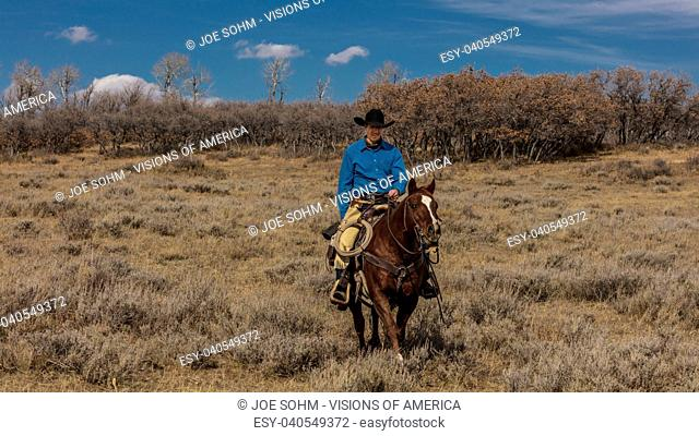 OCTOBER 2017, Ridgway, Col.orado: Cowboy o-n Cattle Drive Gather Angus/Hereford cross cows and calves of Double Shoe Cattle Company, Centennial Ranch