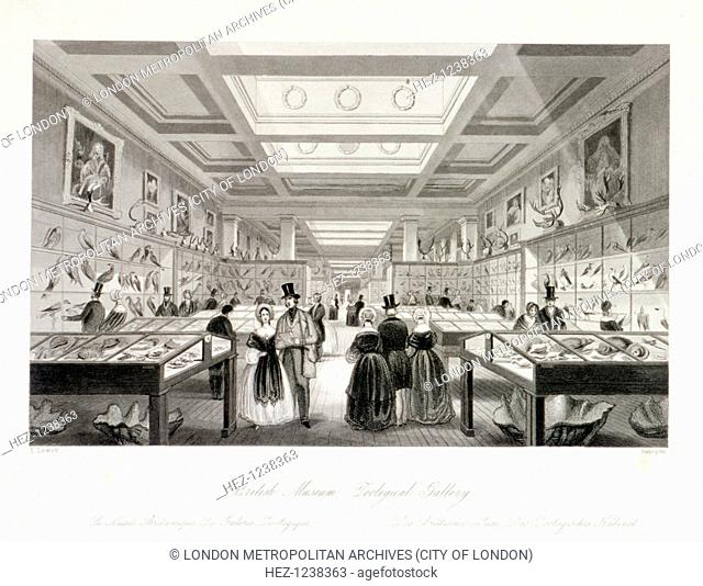 The Zoological Gallery, British Museum, Holborn, Camden, London, c1850; showing visitors looking at displays