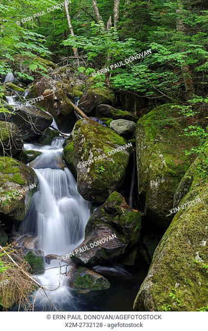 Cascade #8 along Cold Brook in Low and Burbank's Grant, New Hampshire during the summer months