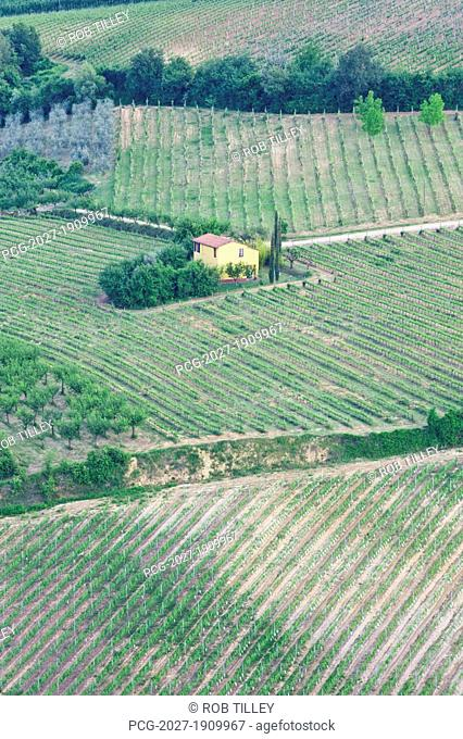 Yellow House in a Vineyard
