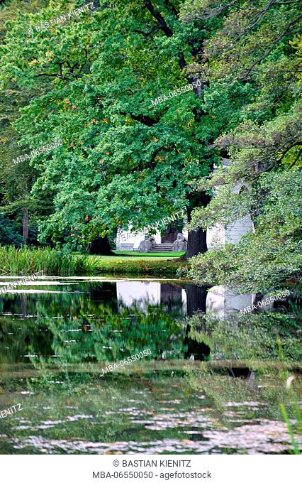An old tree is reflected in a park in a pond