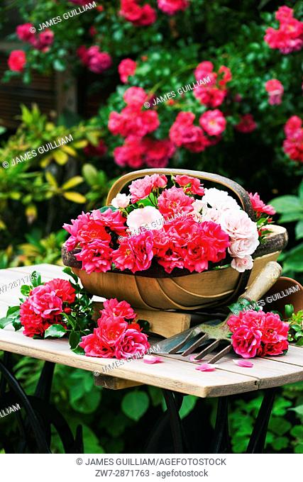 Rustic wooden garden trug basket filled with garden Roses on table outdoors
