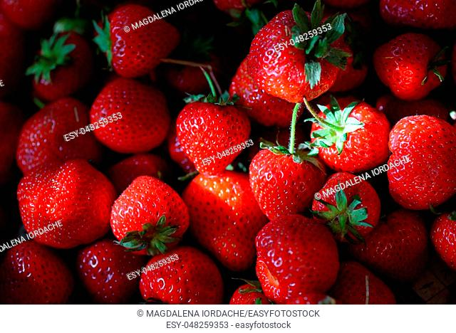 Fresh ripe strawberries and sunrays
