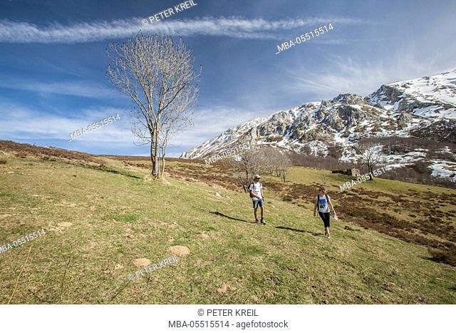Hikers on alpine meadow with snow-capped mountains, tree, spring, Asturias, Picos de Europa