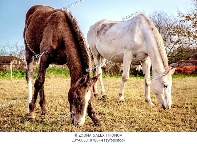 Horses feeding outdoors
