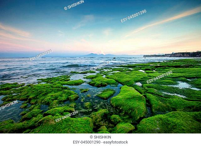 Rocky shore covered with green seaweed with the beautiful ocean in the early morning with views of the volcano and the mountains. Indonesia Bali