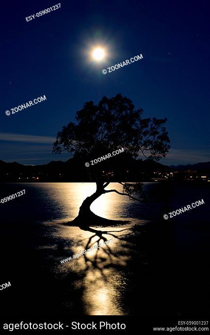 Night view of Wanaka tree and Lake Wanaka in moonlight, New Zealand
