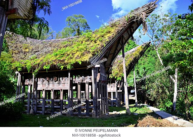 Expired traditional Tongkonan houses ancestral houses, Kete Kesu, Rantepao, Toraja highlands, Tana Toraja, Sulawesi, Indonesia, Southeast Asia
