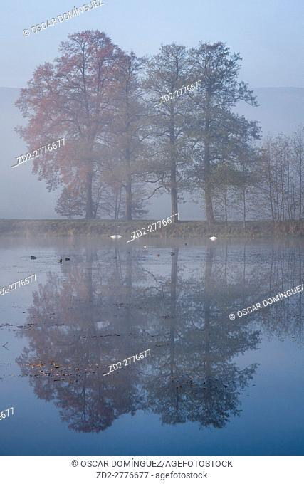 Mist over small lake. Lower Silesia. Poland