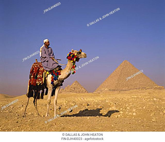 Egypt, Cairo, Giza, Mycerinus and Queens Pyramids, Camel and Driver