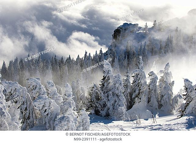 Summit of Great Arber, highest summit of the Bayerischer Wald, snow-packed spruces and rocks, clouds and fog, Bavaria, Germany