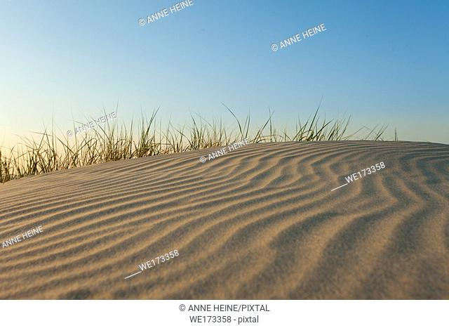 Wind shaped sand ripples on a Dune on the Island Baltrum in the North Sea, Ostfriesland, Germany