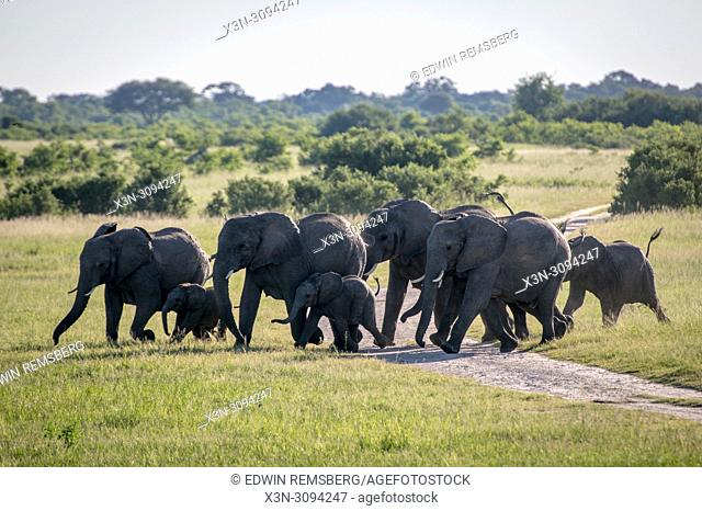A family of elephants march across the landscape of Hwange National Park. Hwange, Zimbabwe