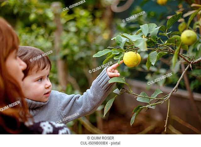 Mother and daughter looking at lemons on tree