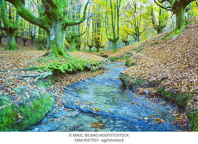 Beechwood and rivulet. Otzarreta, Gorbeia Natural Park, Biscay, Spain, Europe
