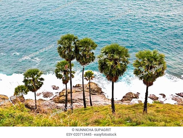 Sugar Palms by the Andaman Sea, Phuket, Thailand