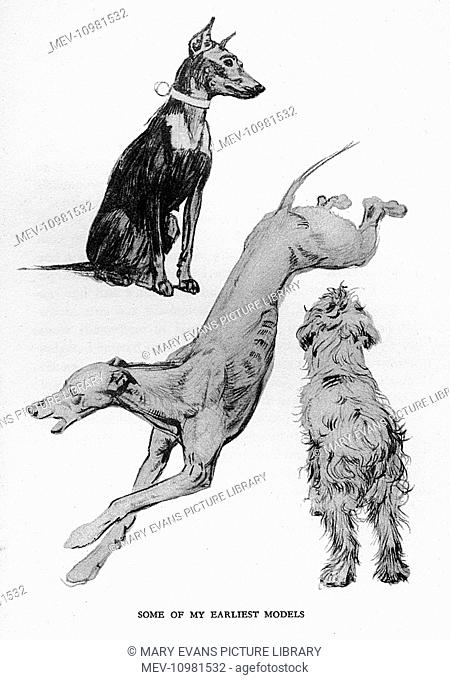 Sketches by Cecil Aldin in his autobiography, Time I Was Dead, showing three different breeds of dog who were some of his earliest models -- a Doberman Pinscher