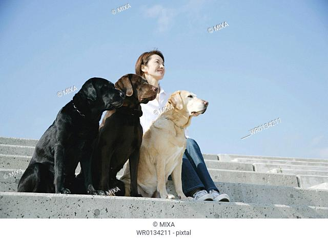 Young woman and Labrador retrievers