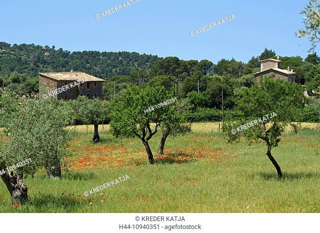 Balearic Islands, Majorca, Mallorca, Spain, Europe, outside, Finca, country house, poppy blossom, poppy, poppies, flower meadow, flower meadows, flower, flowers