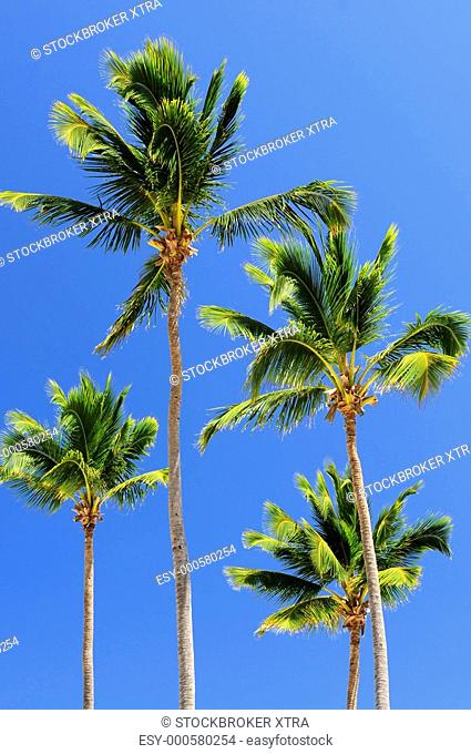 Sunlit palm trees on blue sky background