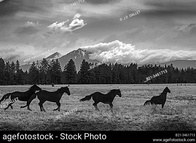 USA, Oregon, near Sisters. Horses