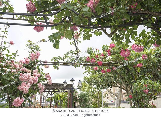 Rose park in Tordesillas monumental town in Castile Leon Spain