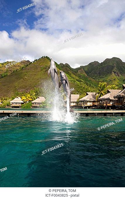 French Polynesia, Moorea, hotel, dolphins marina