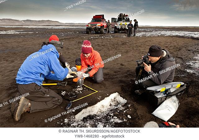 Scientist taking samples and measuring the ash fall from Grimsvotn volcanic eruption, Iceland  Team on ash covered glacier approx  35 kilometers from the crater...