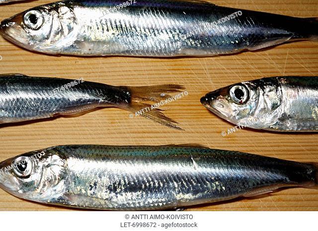Baltic herrings