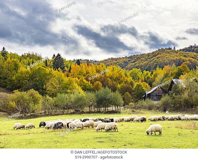Buchovina Romania Scenic Landscape