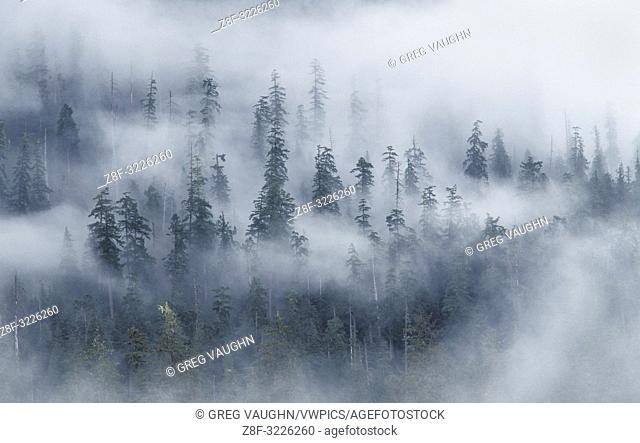 Forest and fog above Hoh River, from Spruce Nature Trail; Olympic National Park, Washington