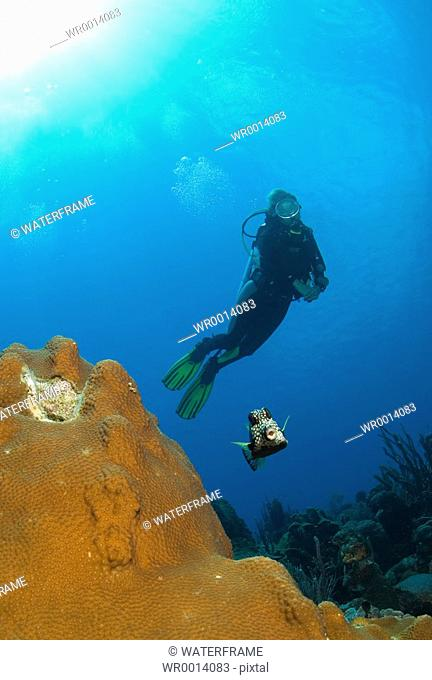 Diver and Smoth Drunkfish, Lactophrys triqueter, Caribbean Sea, Netherland Antilles, Curacao
