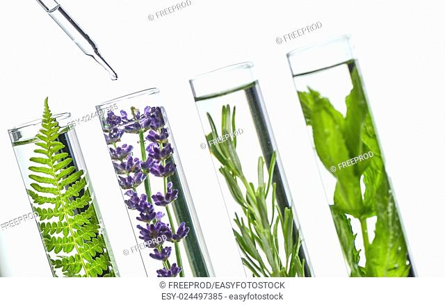 Laboratory, Fern, lavender, rosemary and mint in test tubes Biochimic