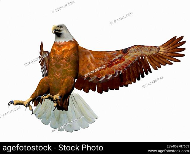 magnificent eagle landing on it isolated in white background