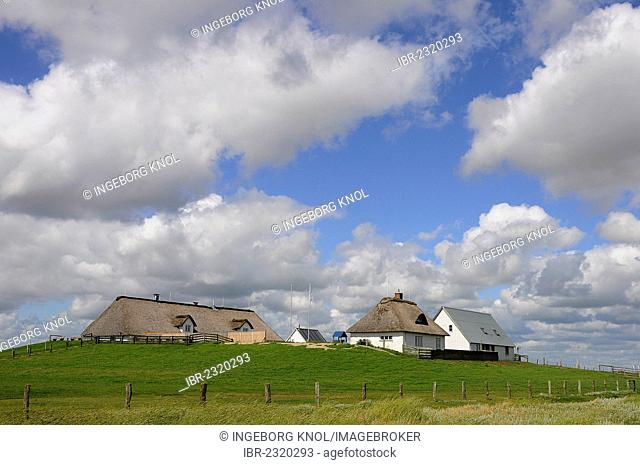Salt marshes and houses with thatched roofs on a terp, Hamburger Hallig, North Frisia, Schleswig-Holstein, Germany, Europe