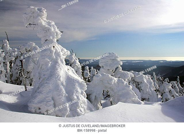 Landscape with snow-covered conifers in the German national park Hochharz in winter at the top of the Brocken mountain - Brocken, Harz, national park Hochharz