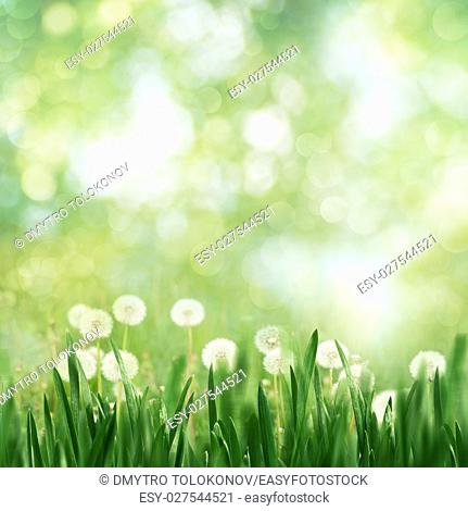 Seasonal landscape with dandelion flowers and beauty spring foliage