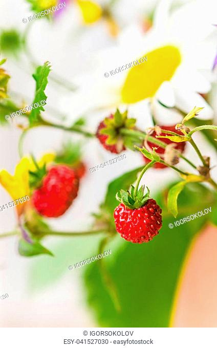 Summer bouquet of forest flowers and strawberries