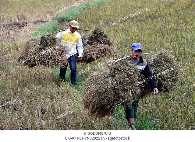 Vietnam farmers working in his rice field
