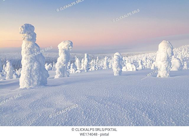 Typical ice sculptures in the woods of Riisitunturi national park, posio, lapland, finland, europe