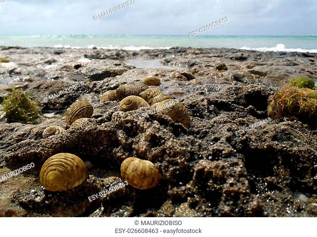 Group of sea snails in front of the sea in Maria la Gorda Cuba