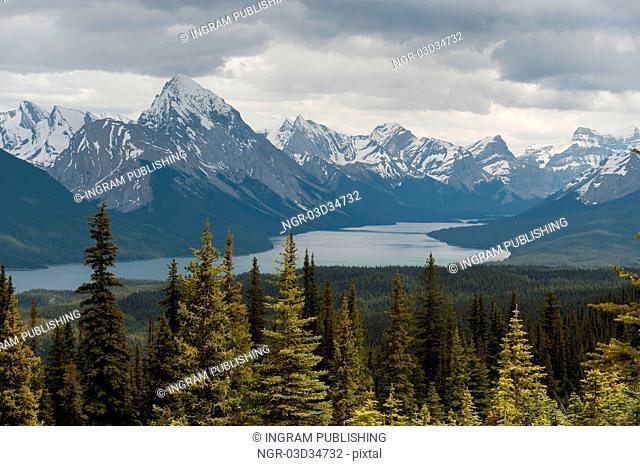 Evergreen trees in a forest, Maligne Lake, Jasper National Park, Alberta, Canada