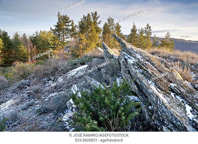 Slate and pines in the Picayuelas. Sierra Norte. Montejo de la Sierra. Madrid. Spain. Europe