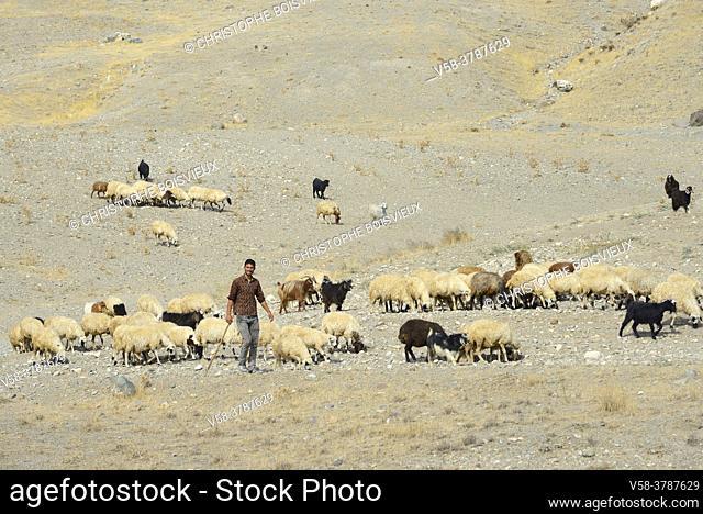 Iran, West Azerbaijan province, Qareh Ziya Eddin region, Kurdish shepherd